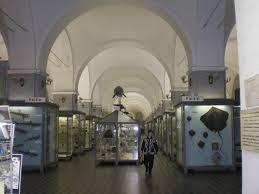 Зоологический музей им. Н. Н. Щербака